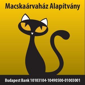 macskaárvaház fotó 1