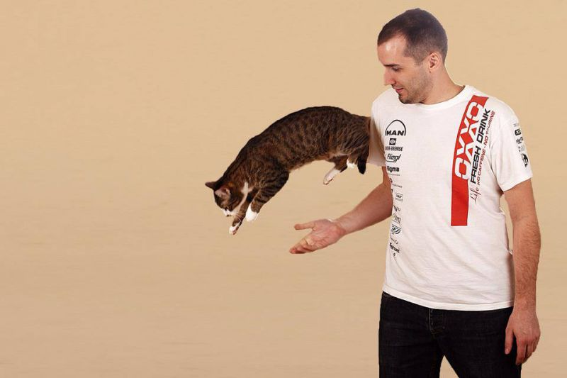 kiss norbi macska